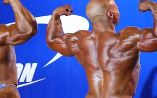 musclebulls: pro nutrition grand prix 4288 - open
